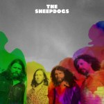 sheepdogs-sheepdogs-4028