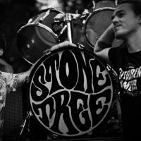 Stonetree - Void Fill II